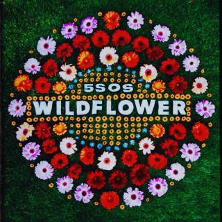 wildflower 5 Seconds Of Summer